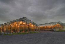 В Ростовской области запускается овощной суперпроект