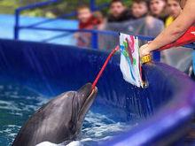 Около «Доммера» в Красноярске открывается дельфинарий