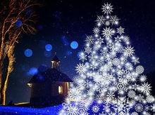 В Новосибирске на 5 - 7% подорожают новогодние елки