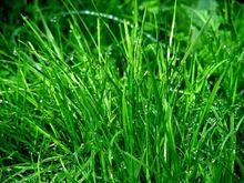 Администрация Новочеркасска потратит 2 миллиона на озеленение города