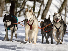 Выходные в Нижнем Новгороде: гонки на собачьих упряжках, фестиваль науки, «ВолгаХоверШоу»