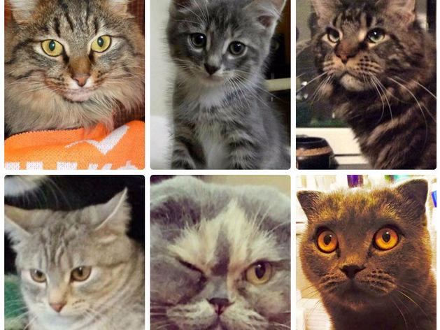 Мартовские коты: 11 домашних питомцев бизнесменов Екатеринбурга / ФОТО