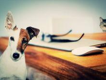 Новосибирские бизнесмены рассказали о своих собаках