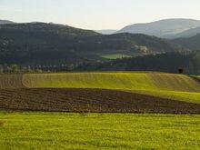 Правительство: агробизнес семьи министра сельского хозяйства - это не конфликт интересов