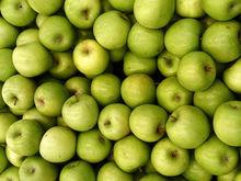 Яблоки и гусеницы: под Екатеринбургом раздавят 19 тонн санкционных фруктов