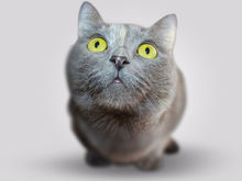 Коты бизнес-сообщества. Новосибирские предприниматели рассказали, как стать их любимцем