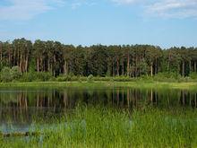 Исполком Казани заявил об ошибке: вырубят один, а не десять гектаров парка Лебяжье