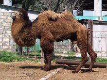 В зоопарке «Лимпопо» 1 июня детей ждет бесплатный вход и праздничная программа