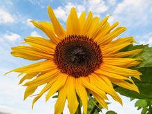 Сезонность - в прибыль: выбираем летний вклад. СОВЕТЫ экспертов