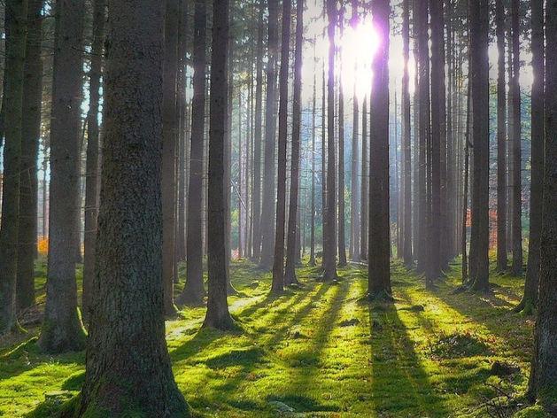 Путин подписал закон о создании «зеленого щита» вокруг городов и сокращении вырубок