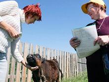 Все работы по подготовке сельхозпереписи в Ростовской области выполнены