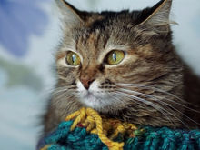 Кризис: россияне экономят на ресторанах, но не на корме для котиков