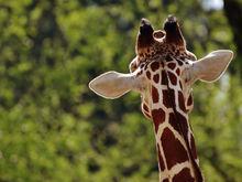 Жирафы, отель и океанариум. Одобрена концепция нового екатеринбургского зоопарка