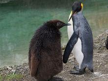 Пингвинарий в новосибирском зоопарке откроется завтра
