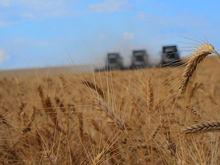 Ростовская область стала первой в России по сбору ранних зерновых
