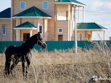 10 готовых бизнесов на продажу в Нижнем Новгороде: «Подворье Владыкино» и колхоз
