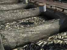 В Татарстане завели уголовное дело по гибели рыбы в Заинском рыбхозе