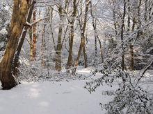 Нижний Новгород готовится к зиме: бюджет на уборку снега увелили, изучается опыт Финляндии