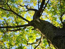 К вопросам озеленения Ростова будут привлекать экспертов