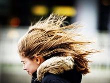В Ростове объявлено штормовое предупреждение из-за сильного ветра ФОТО