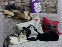 В Челябинске открывается антикафе «Котофей», где будет много кошек