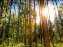 Новосибирск обрел концепцию развития зеленых зон