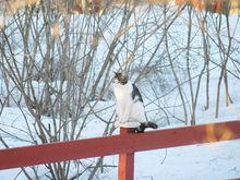 Погода на выходные, 26-27 ноября, в Нижнем Новгороде: тепло, еще теплее. Потом - холодно