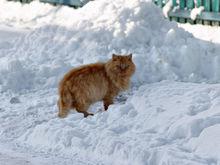 Прогноз погоды в Нижнем Новгороде на выходные, 3-4 декабря: морозное начало
