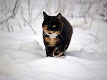 Погода на выходные, 17-18 декабря, в Нижнем Новгороде: морозы отпустят