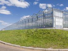 Фирма Абрамовича отказалась от строительства тепличного комплекса в Гуково