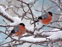 Гидрометцентр Татарстана предупреждает об экстремальном похолодании