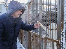 Владимир Гройсман открыл в Нижнем Новгороде приют для бездомных собак и кошек