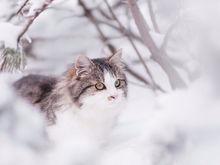 Прогноз погоды на праздничную неделю в Нижнем Новгороде: уйдем в минус
