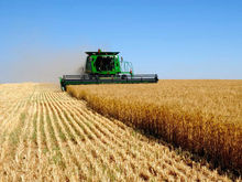 В Ростовской области упрощается система выдачи кредитов сельхозпроизводителям