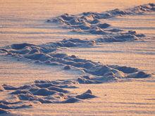 Новосибирские частные предприятия вывезли с улиц города 111 977 кубометров снега
