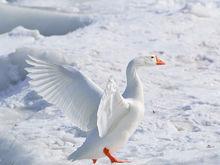 Погода на уикенд 28-29 января в Нижнем Новгороде: холодно и пасмурно