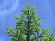 Застройщик территории на Б. Хмельницкого пообещал посадить новые деревья взамен срубленных