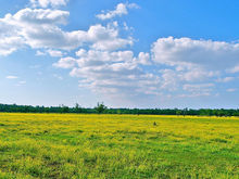 Земля в черте Красноярска к весне может подорожать на треть