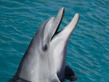 В Новосибирске открылся Центр плавания с дельфинами