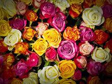 Новосибирский тепличный комплекс начнет выращивать цветы