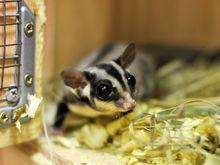 В красноярских торговых центрах могут запретить контактные зоопарки