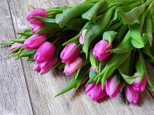 Праздник цветочников: сколько на самом деле стоят тюльпаны на 8 марта