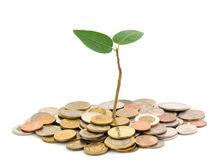 Прибыль крупных и средних компаний Дона в 2016 году составила почти 85 млрд рублей
