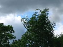Скорость ветра в Ростове должна снизиться к концу недели