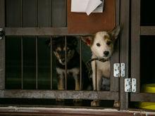 Нижегородская мэрия выставила на продажу долю в собакроприёмнике фонда «Сострадание»