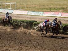 В Старочеркасске не будут строить новый ипподром и конно-спортивную школу