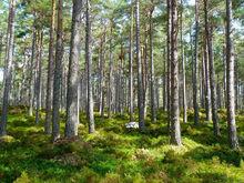 Экологию Челябинской области улучшат за счет «Росатома»