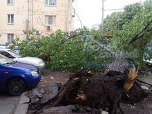В Ростове на остановку упало дерево ФОТО