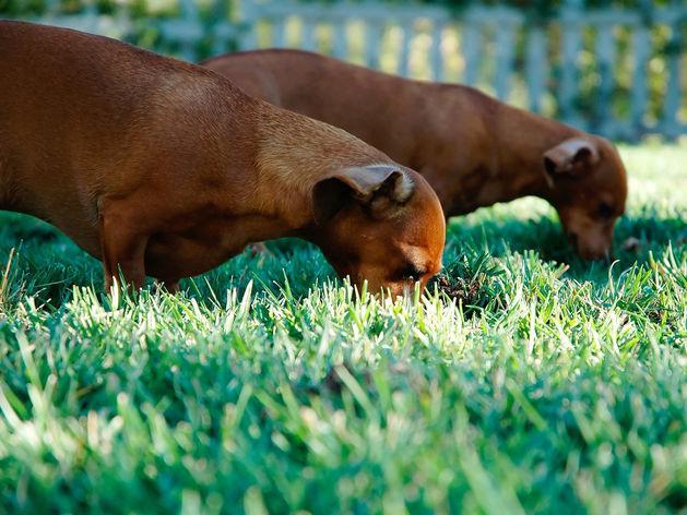 Производителям кормов для питомцев грозят санкциями. Они потеряют миллиарды