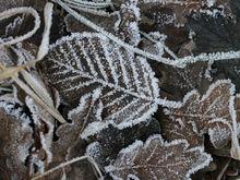 МЧС распространило экстренное предупреждение о заморозках в Нижегородской области